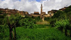 Vigneti-urbani-Siena-Senarum-Vinea