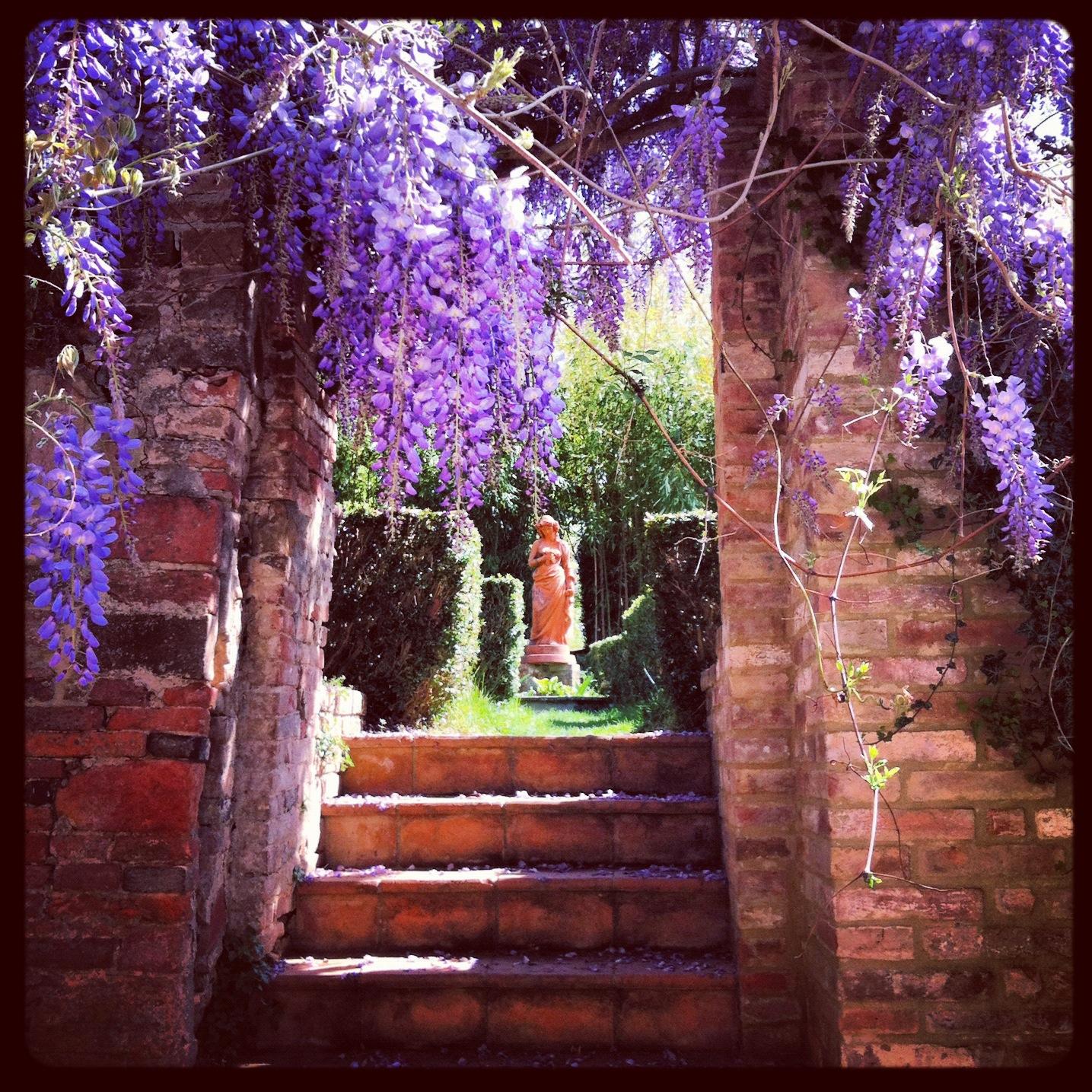 wisteria flowers on the italian garden - Fattoria del Colle