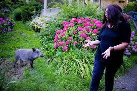 piccolo cinghiale in giardino