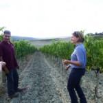 Montalcino 2013 harvest grape tasting
