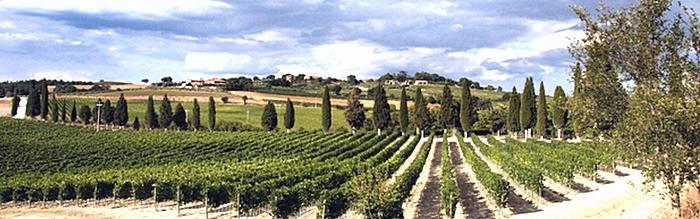 Le Terre del Vino - ORCIA DOC, CAPITONI (1)