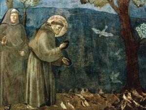 Giotto San Francesco Assisi