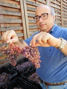 Carlo with the TRaminer grapes for passito