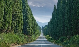 Viale dei cipressi, Bolgheri