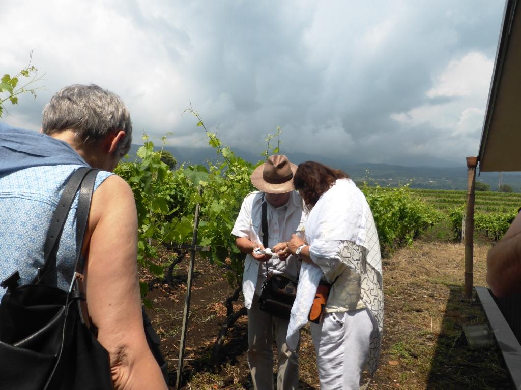 Scammacca del Murgo i Bourguignon nel vigneto