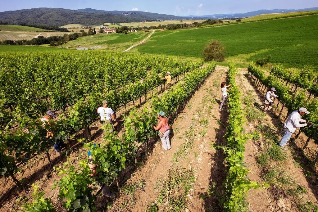 Vigne-di-Brunello-Montalcino-Casato-Prime-Donne
