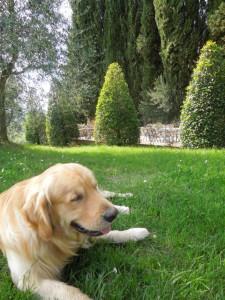 Pasqua-Agriturismo-in-Toscana-Fattoria del Colle- primavera - Felix nel parco delle piscine
