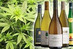 Marijuana-e-vino-esperienza-USA-che-fa-riflettere