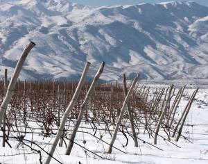 HIgh-altitude-wines-karasi-Tsorah, Karasi Areni Noir, Armenia