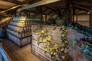 Bolgheri museo del vino
