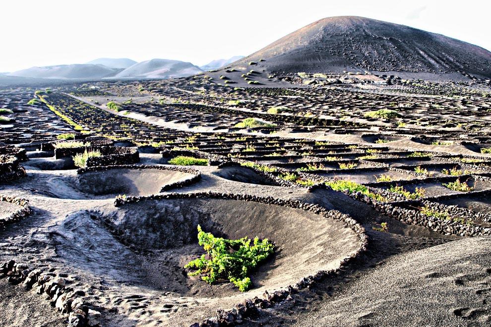 wine-destination-isole-canarie