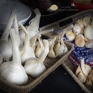 natura-alla-Fattoria-del-Colle-aglione