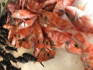 Gozo-pesce-freschissimo
