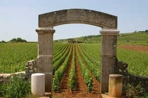 Borgogna-il-vino-del-futuro-sarà-diverso