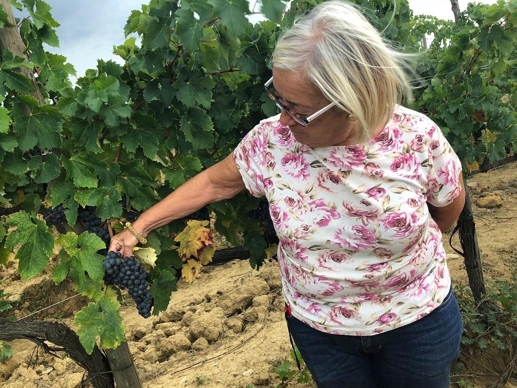 2018-vendemmia-sangiovese-Fattoria-del-Colle-Toscana