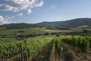 Nutrizione-delle-vigne-Montalcino-CasatoPrimeDonne