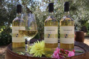 IGT Toscana white wine Sanchimento - Donatella Cinelli Colombini - Fattoria del Colle