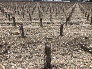 Bordeaux vigneto marzo 2018