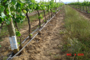 Irrigazione-nei-vigneti